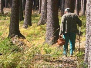 Опасности «тихой» охоты