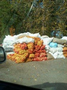 Яблочная страда